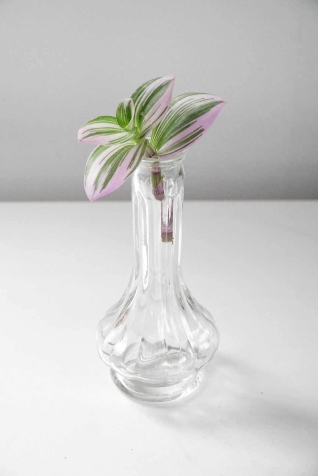 nanouk tradescantia paars kopstek kopstek plant plantje stek stekje terracotta pot potje glas glaasje rood