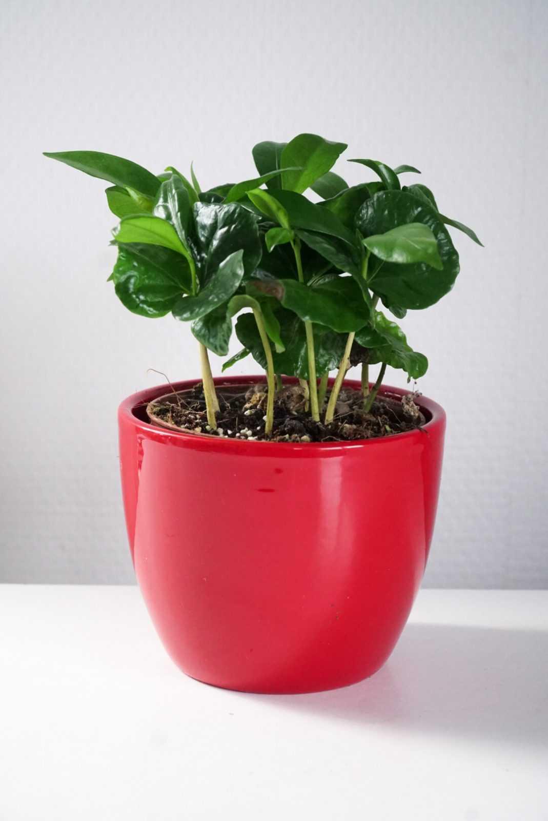 Bloempot, sierpot, kamerplant, steckje, sierpot, pot