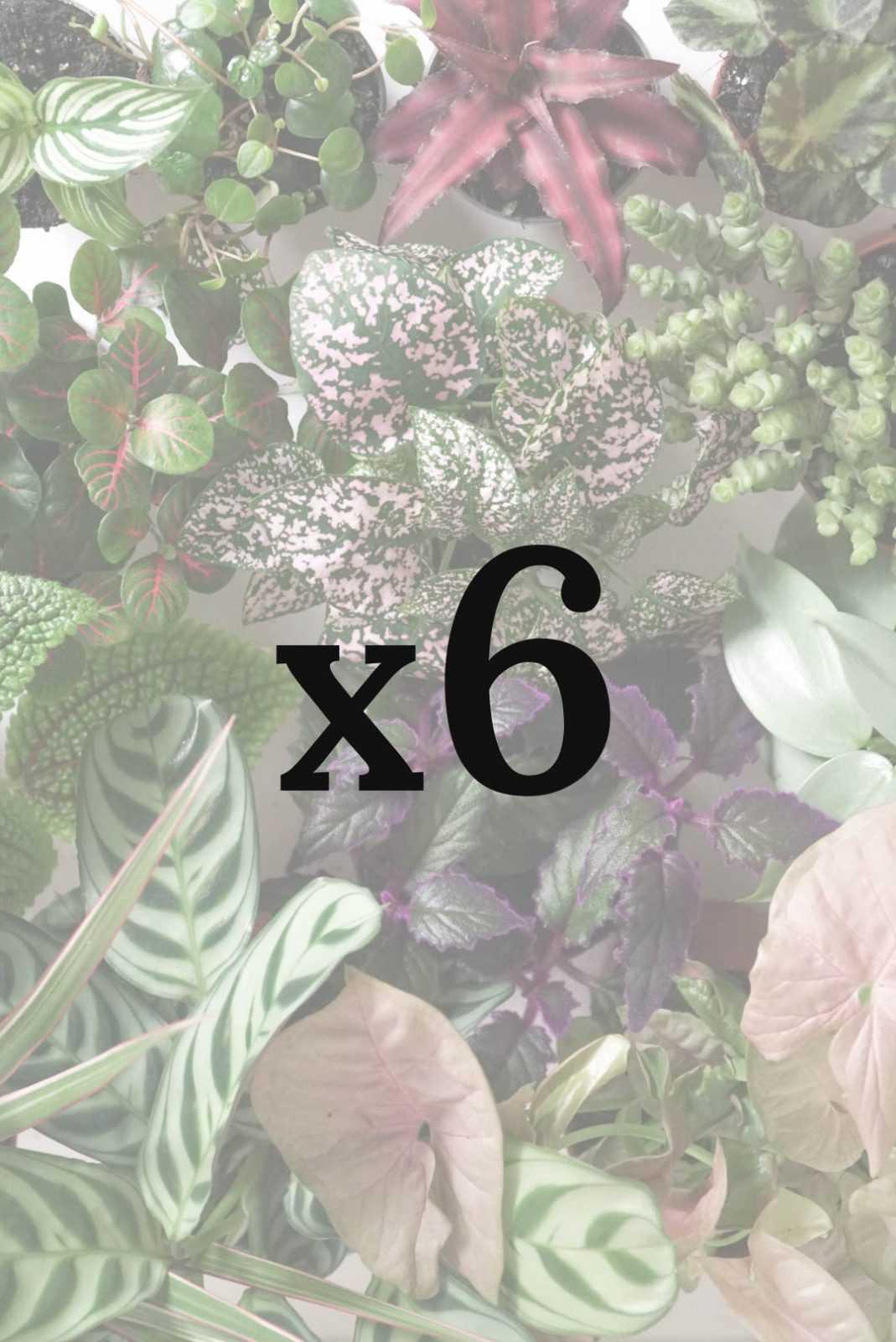 Plantenbox productafbeelding v01 groot